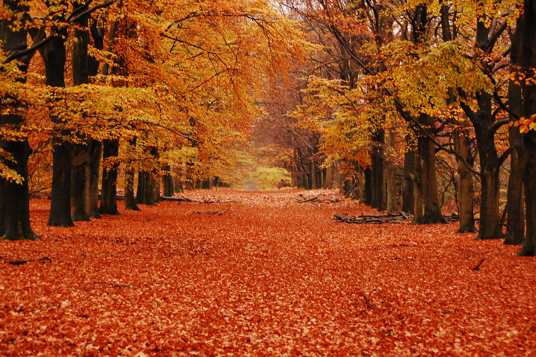 autumn season - photo #18